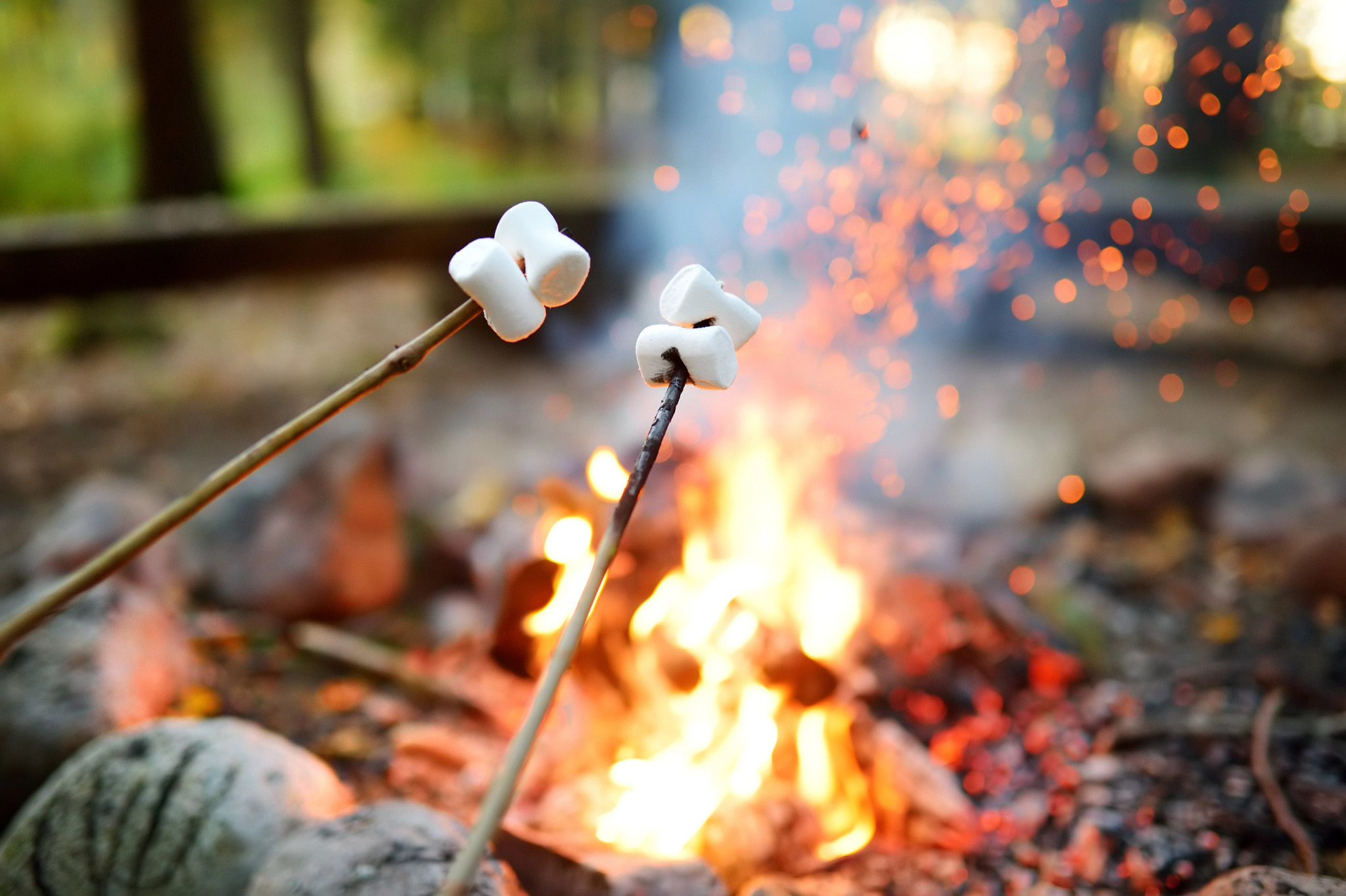 Roasting marshmallows on sticks over open campfire during fall