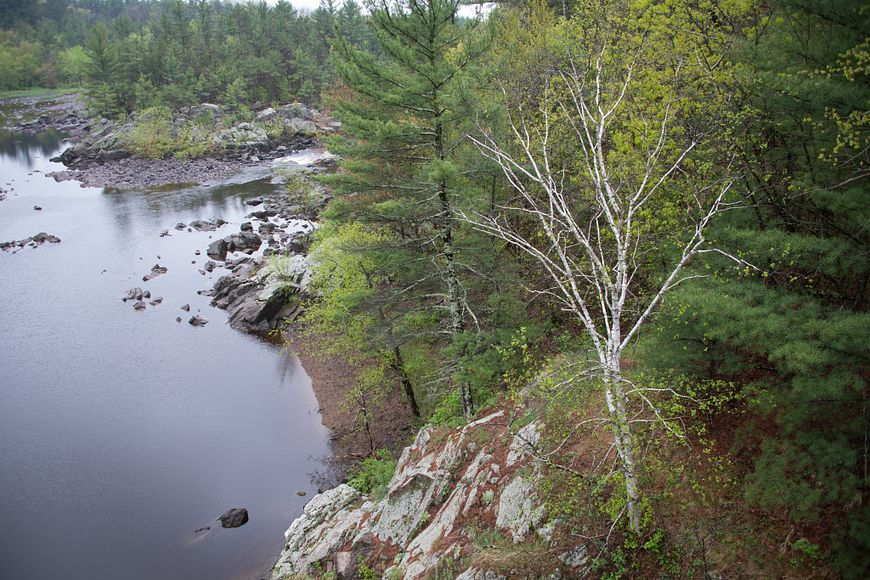 Black River running through state forest