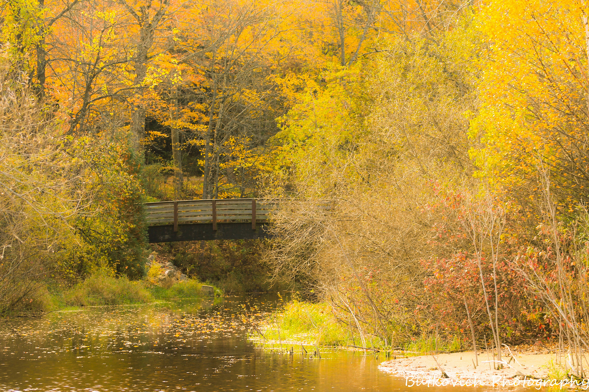 Brilliant fall foliage paints the landscape above Silver Creek in Manitowoc with a rich golden yellow palette.