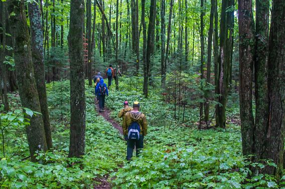 hikers on winding trail in forest