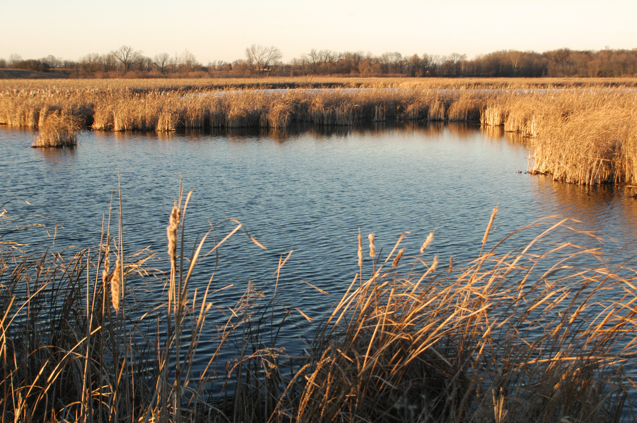 landscape photo of water and aquatic plants at Horicon Marsh