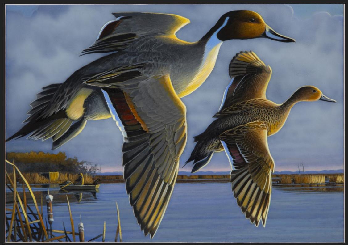 waterfowl artwork by Caleb Metrich