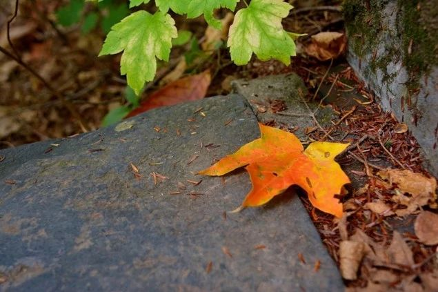 An image of a fall leaf.
