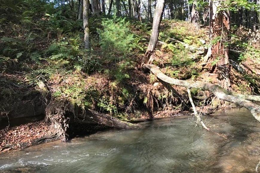 trout pool under log on flowing creek