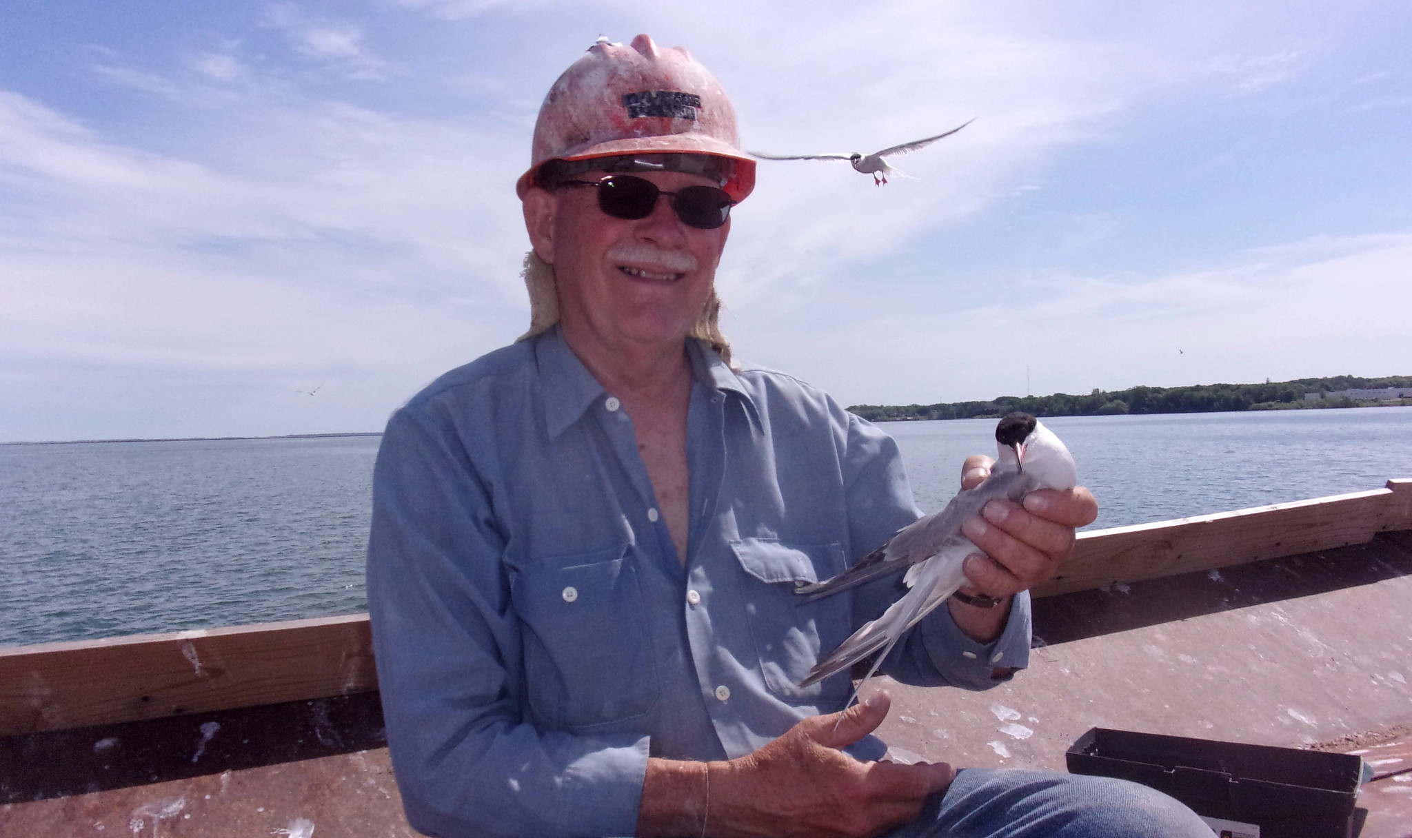 Former DNR wildlife biologist Fred Strand holding a common tern