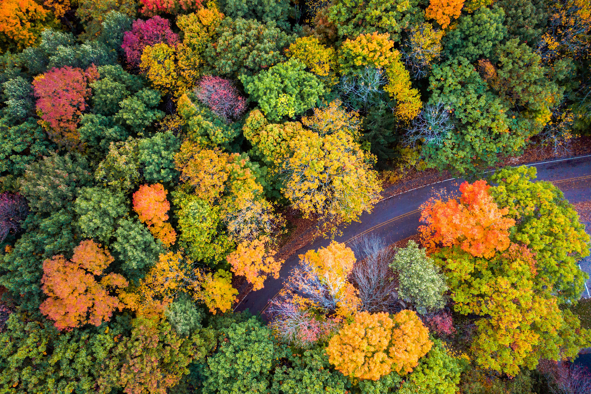 Forest displaying fall colors of orange, red and yellow with a road twisting through the landscape