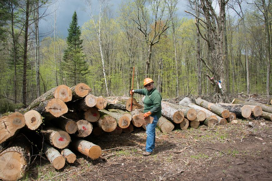 forester doing scaling of a stack of logs