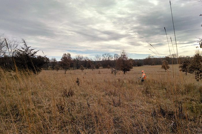 French-Creek-Wildlife-Area---Pheasant-hunting-north-end-looking-south-towards-2nd-parking-lot-south-of-O-3-.jpg