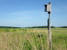 American kestrel nest box in field