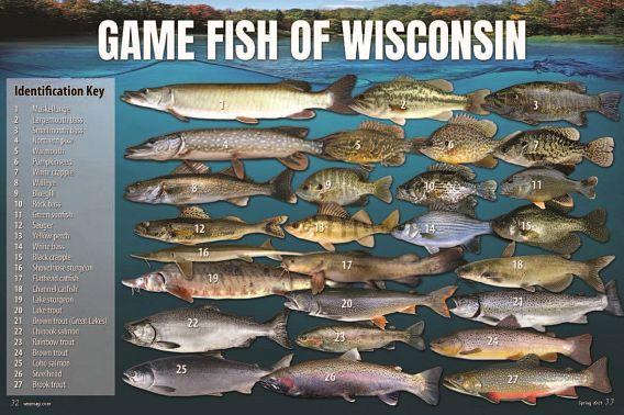 wnrmagSU21RWgamefish.jpg