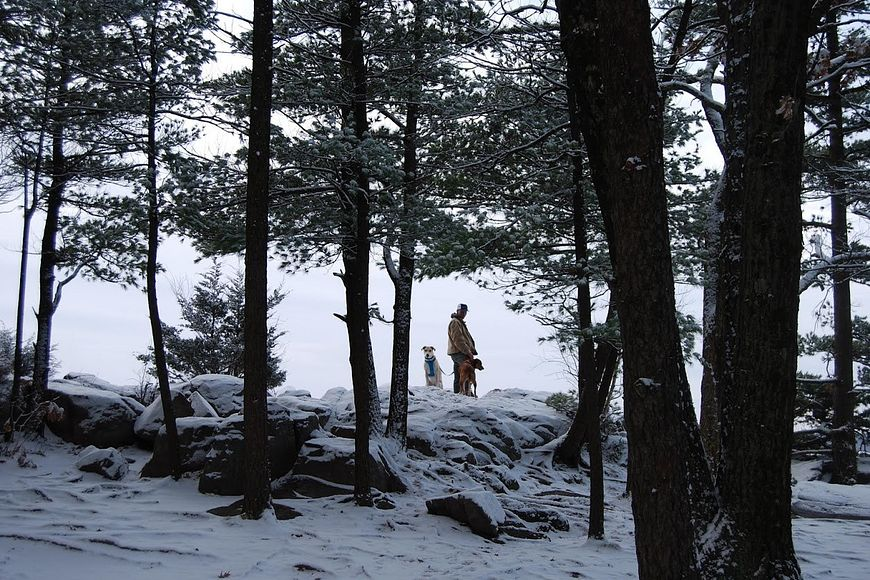 man hiking with two dogs in winter at Devil's Lake State Park