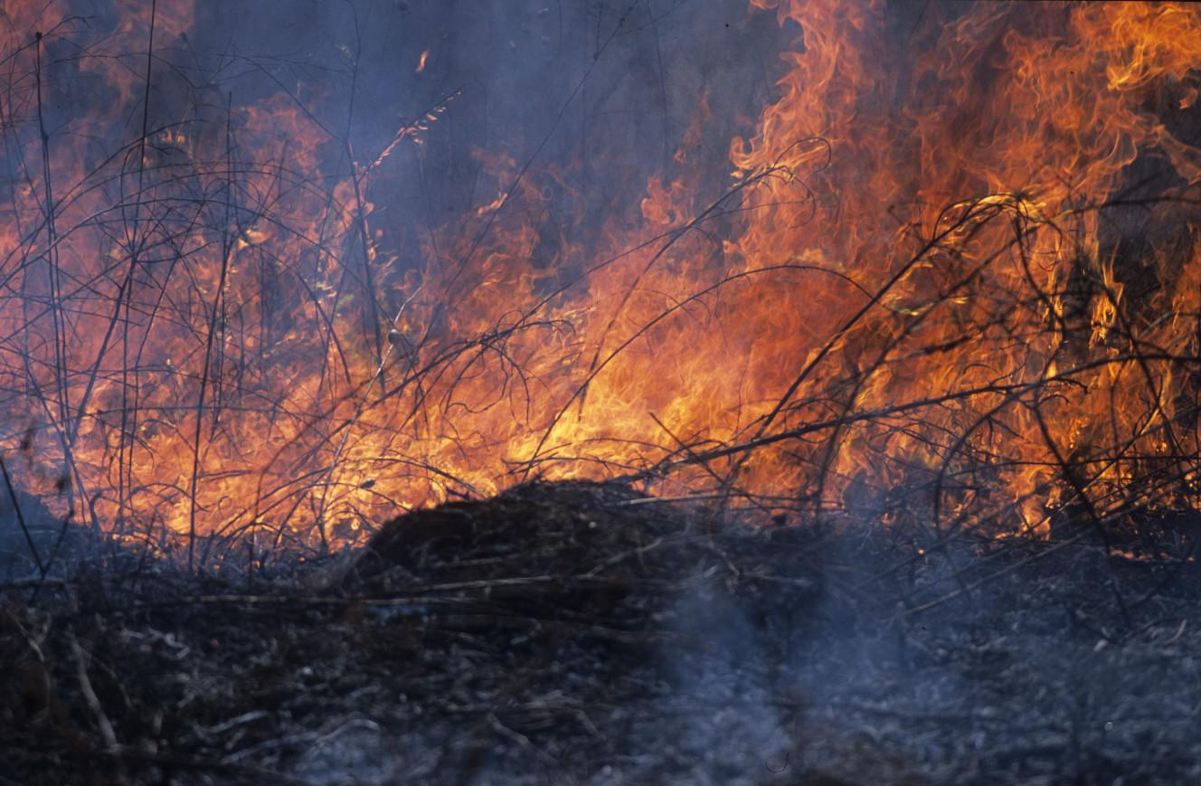 Flames engulf grasses.